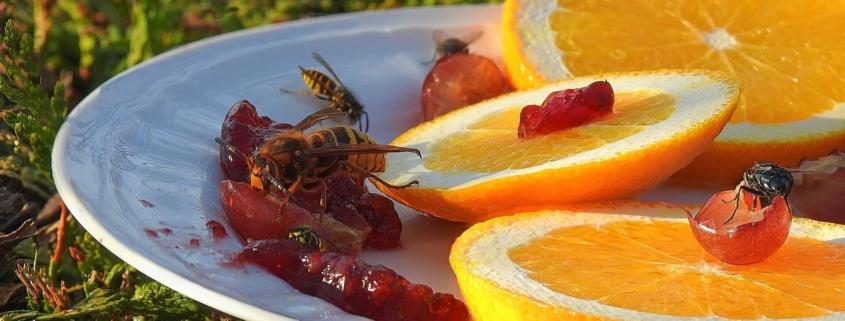Wespen - meine Freunde